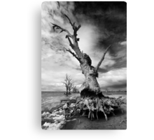 Crab Tree - Mono Canvas Print