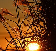 Winter Sunset in the Ornamental Grass by Gilda Axelrod