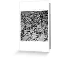 B&W nature Greeting Card