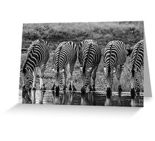 Drinking Zebra (Equus quagga) Greeting Card