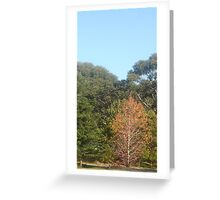 Non Indigenous Autumn in Australia Greeting Card
