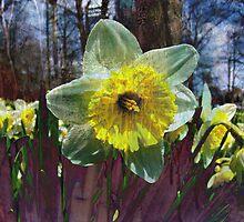 Spring Bloom 2 by Vulcan Spark Studios