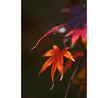 AUTUMN - AGING GRACEFULLY Photographic Print