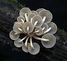 Under Fungi by Louise Wolfers