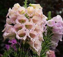 Exquisite, Elegant English Foxgloves by Georgia Mizuleva