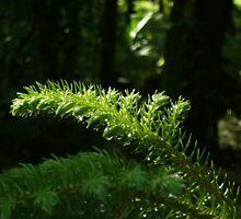 green plant by mkchandran