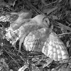 Formerly an Owl by Joe Glaysher