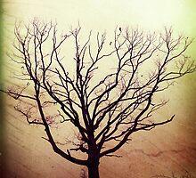 my favorite tree by SilentShudder