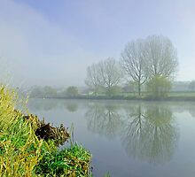 Misty Trees at Waterside, Stapenhill by Rod Johnson