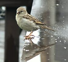 Just another rainy day Sparrow... by LjMaxx