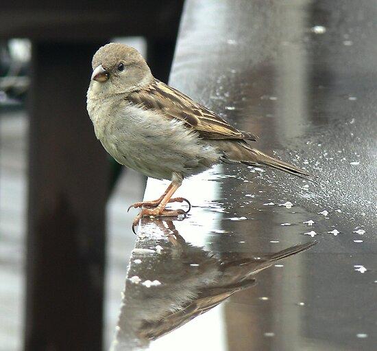Just another rainy day Sparrow... by LjMaxx