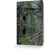 Whitethroated Sparrow Greeting Card