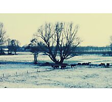 Winter - JUSTART © Photographic Print