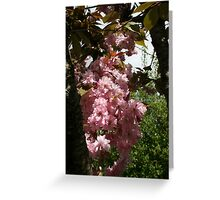 Blossoming Cherry Greeting Card