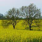 Fields of Gold by shaz
