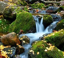 Leaves by the Stream by Ken Fortie