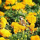 Bird in yellow by julie08