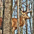 Red Deer - Omega Park by Poete100