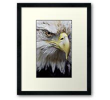 Regal Framed Print