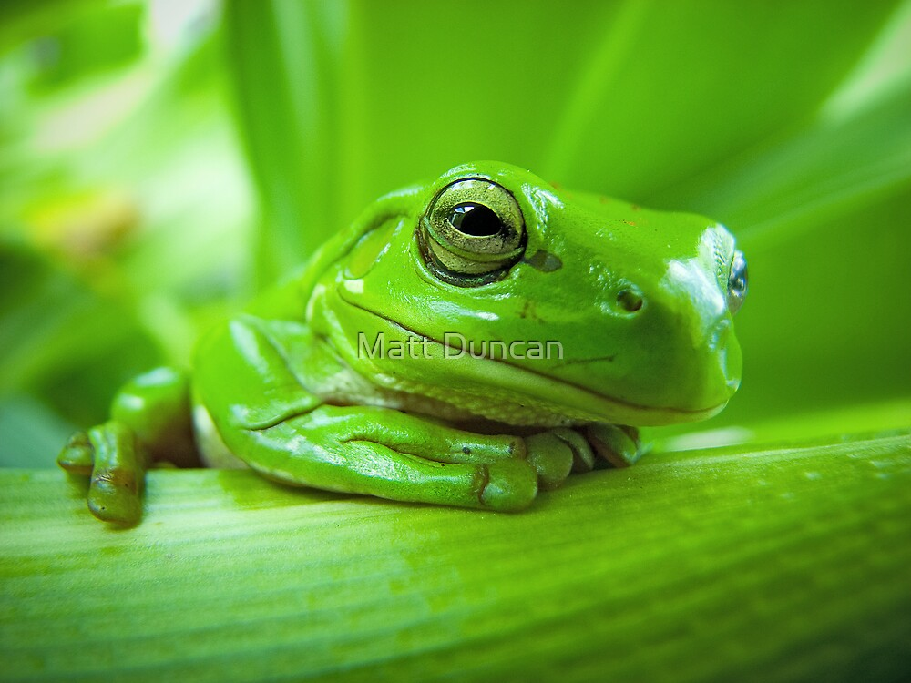Green with envy by Matt Duncan