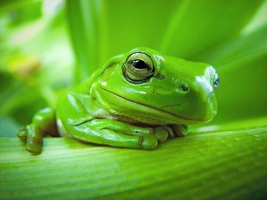 Green with envy by Matt Duncan
