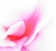 Pink Dreams by Alison  Gainge