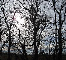 tree line by ksteiling
