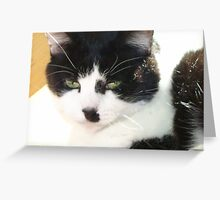 Sunning Greeting Card