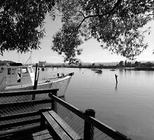 River Tamar, Launceston, Tasmania by nick page