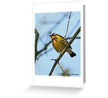 Warbler..not sure what kind Greeting Card