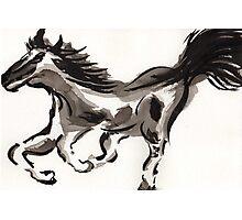 Horse study Photographic Print