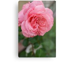 Hope for a new day!  Refreshed in pink!  Rose gets a drink in the dew! Hope in pink!   La Mirada, CA Metal Print