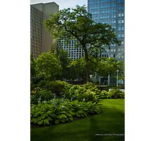 Pittsburgh Pa Garden  Photographic Print