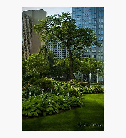 Pittsburgh Pa Garden  Photographic Print
