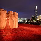Poppies by jon  daly