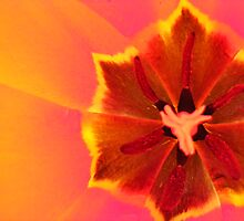 Hott Insides by FlowersofWhimsy