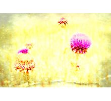 Thistle - JUSTART © Photographic Print