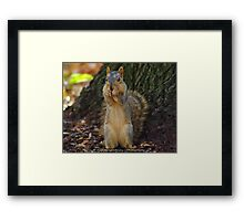 Pittsburgh Squirrel Framed Print