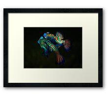 Mandarin Love Framed Print
