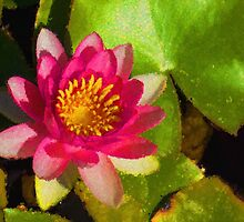 Waterlily Impression in Fuchsia and Pink by Georgia Mizuleva