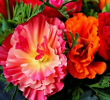 Colours & Flowers Speak all Languages by karina5