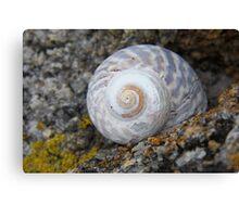 Little Shell Canvas Print