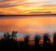 Broadwater Beauty by Deanna Roberts Think in Pictures