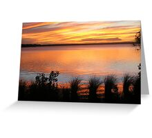 Broadwater Beauty Greeting Card