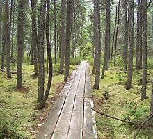 Mossy Woods by Upsidedownck