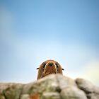 Peekaboo by Andrew  Walmsley