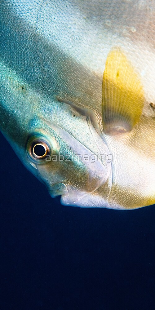 Up Close by aabzimaging