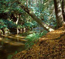 Autumn colours on Aire river by mcnamaraimages