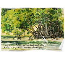 Mangrove Morning Col. 2:6-7a Poster