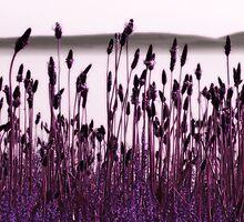 Serenity by Anne Staub